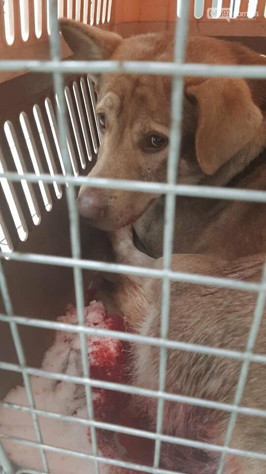У Бучі невідомий познущався над собакою, пес помер