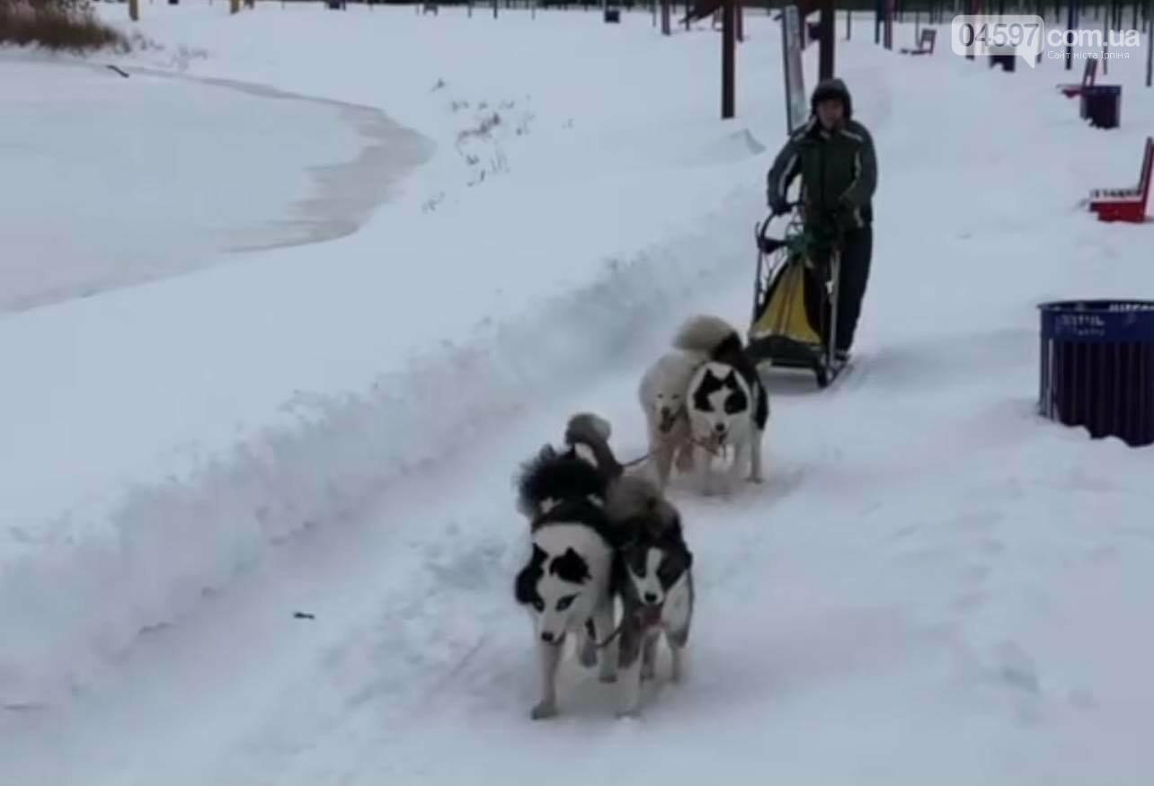 В Ірпені почали кататися на собачих упряжках