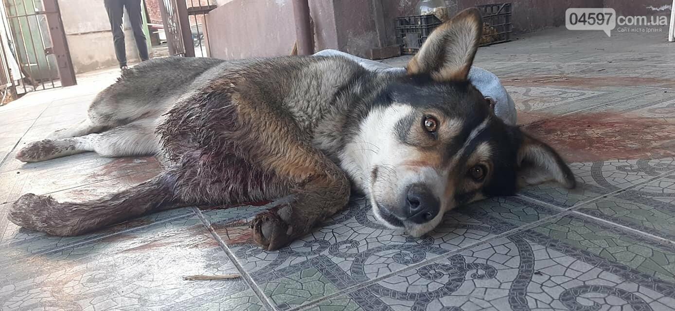 В Бучі підстрелили собаку