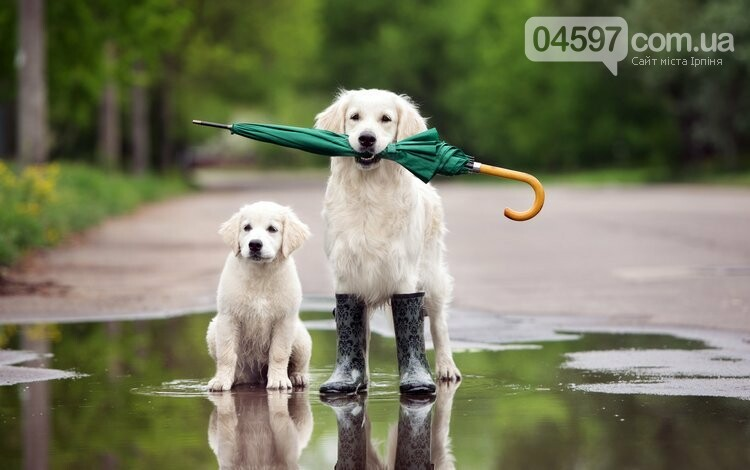 Погода- сидіти вдома: Ірпінь накриють дощі , фото-1