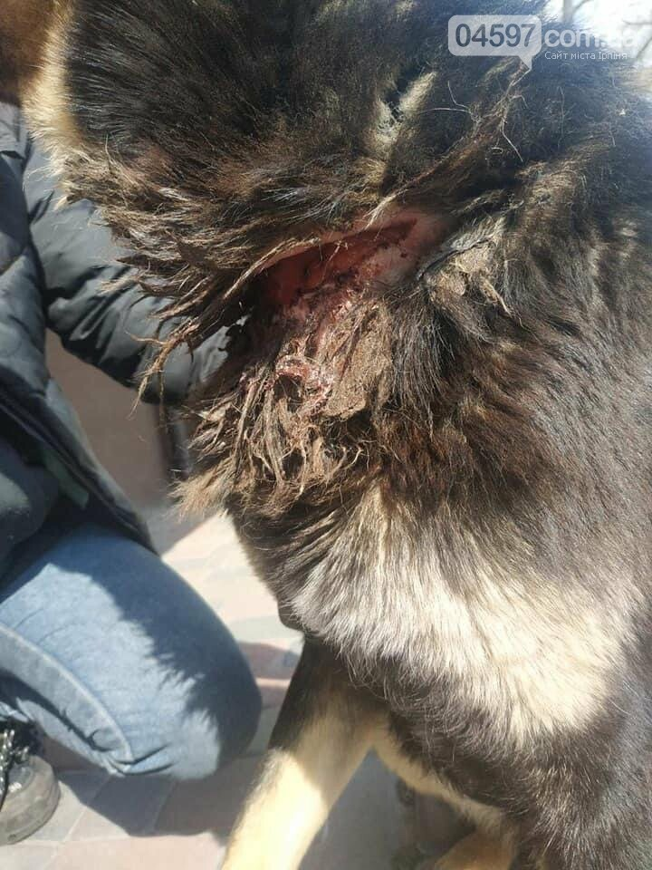 В Ірпені, на Київщині,  діти врятували собакк від удушення