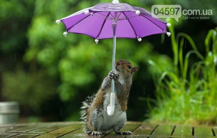Якою буде погода в Ірпені на вихідних 8-10 травня , фото-1