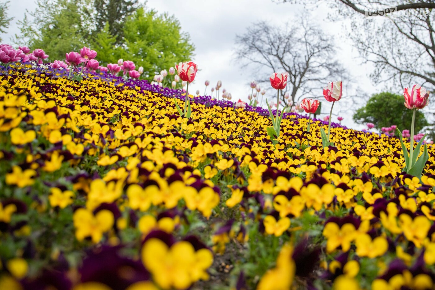 Виставка тюльпанів 2021 у Києві