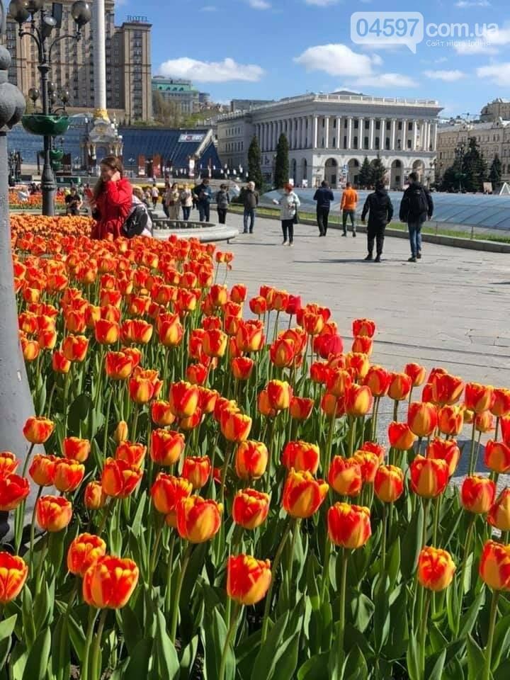 Тюльпани на Майдані Незалежності