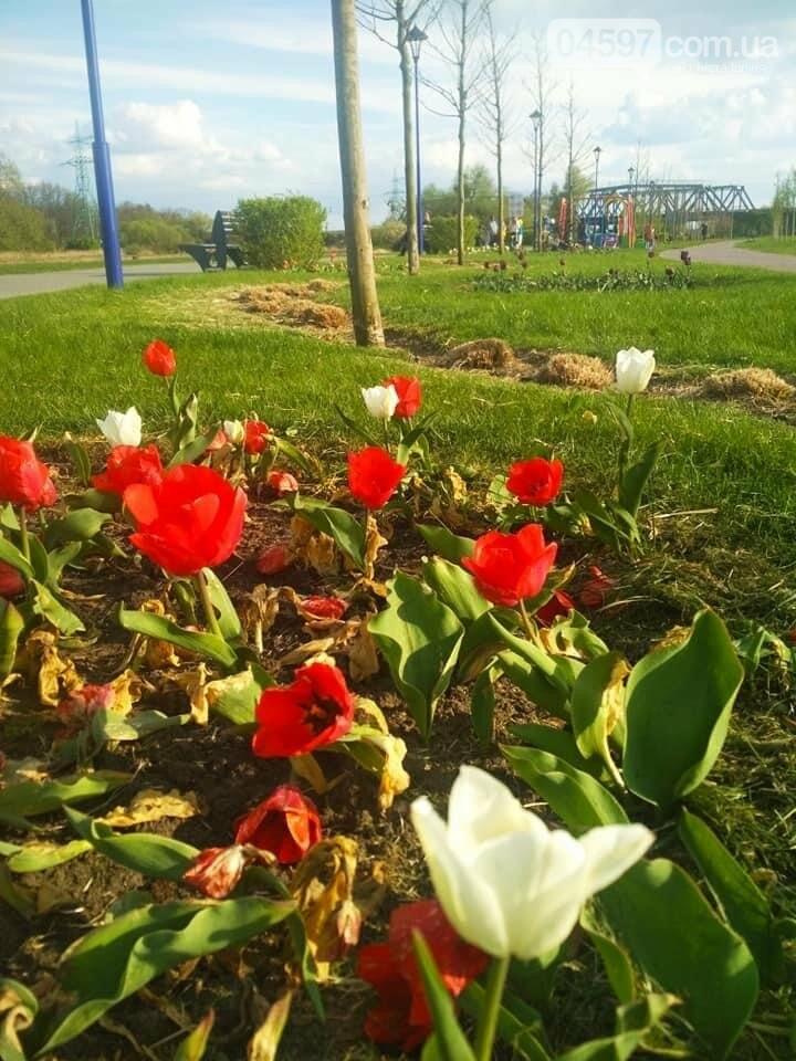 Тюльпани в Ірпені
