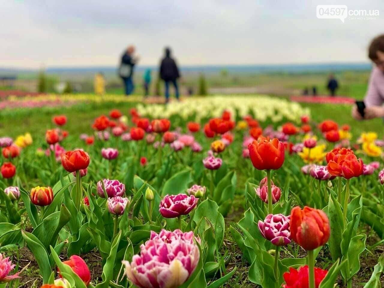 Добропарк тюльпани 2021