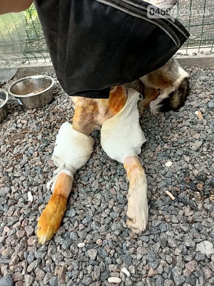 Під Києвом рятують підстрелену собаку, Євгенія Мельник