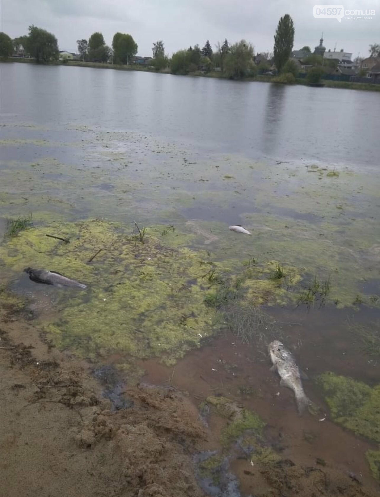 В Гостомелі гине риба