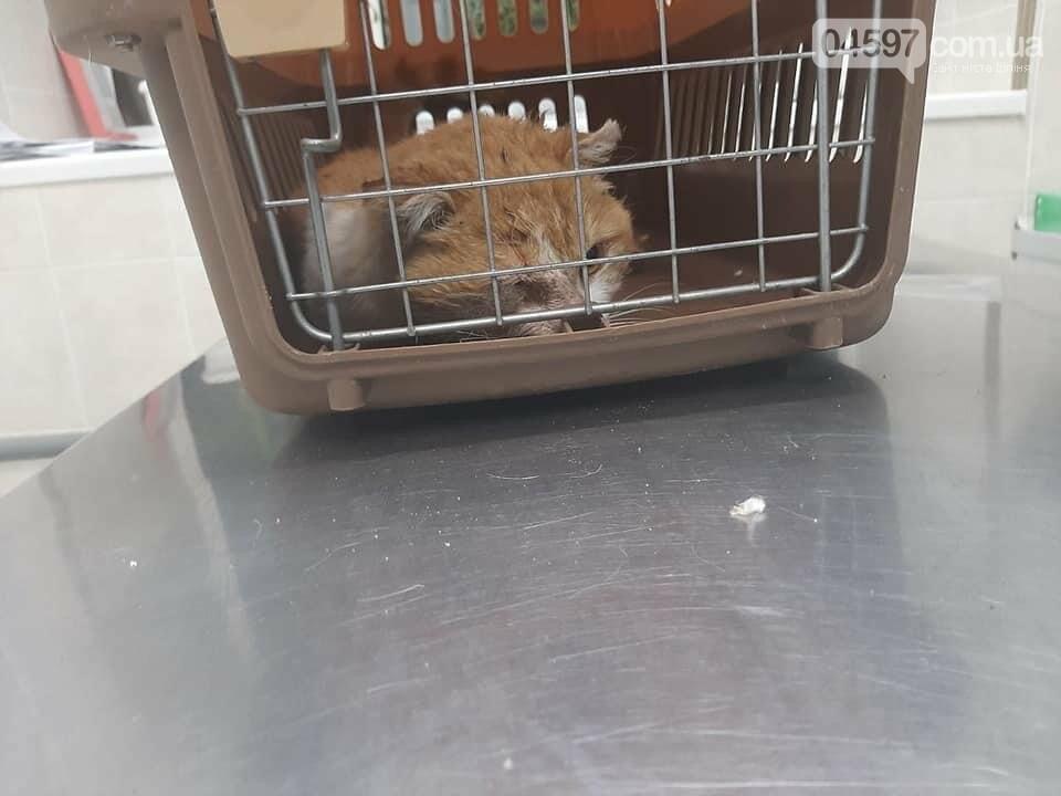 В Ірпені заживо гниє кіт