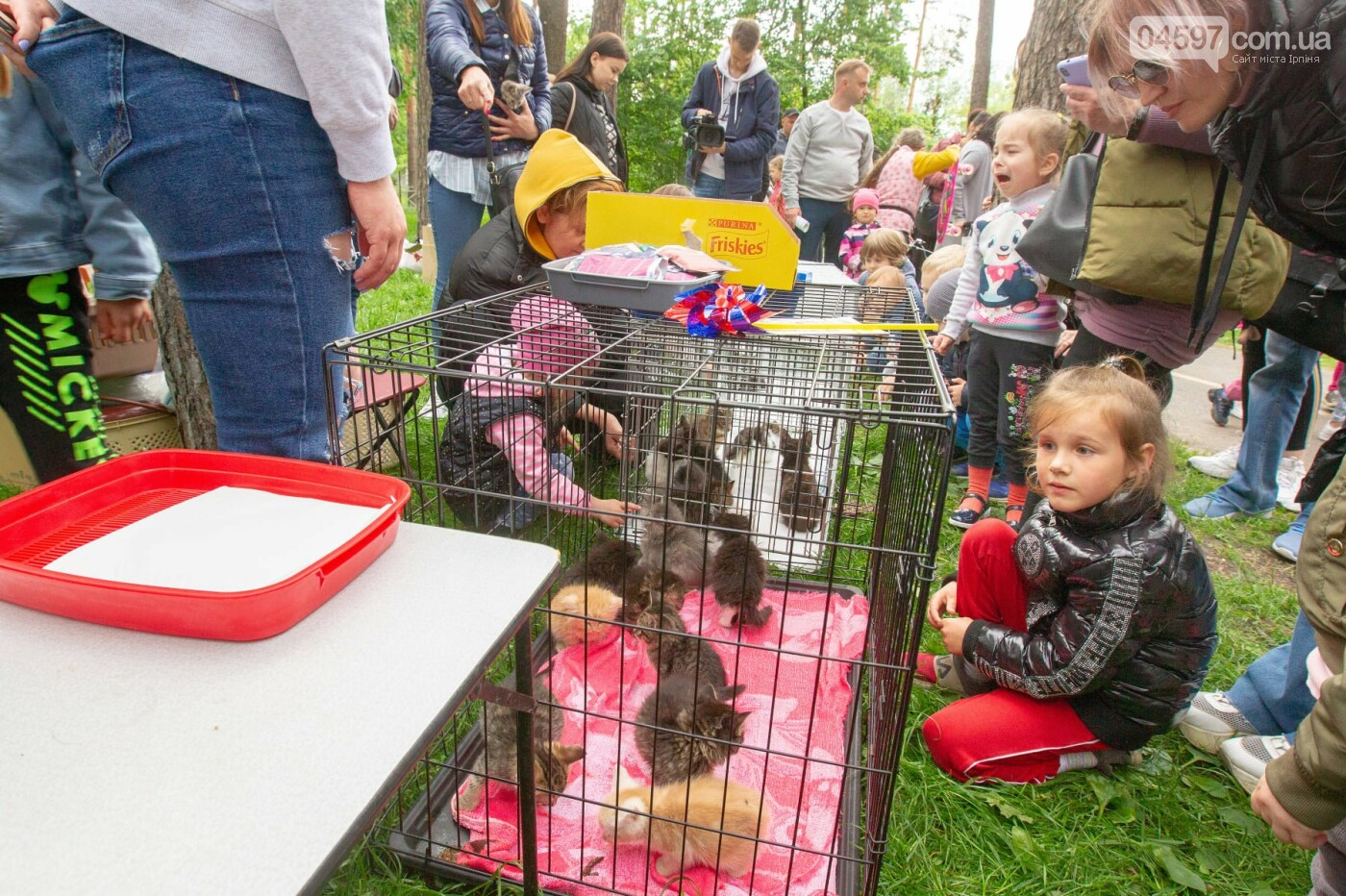 Котоярмарок в Ірпені. Фото О.Гриб та Є.Мельник