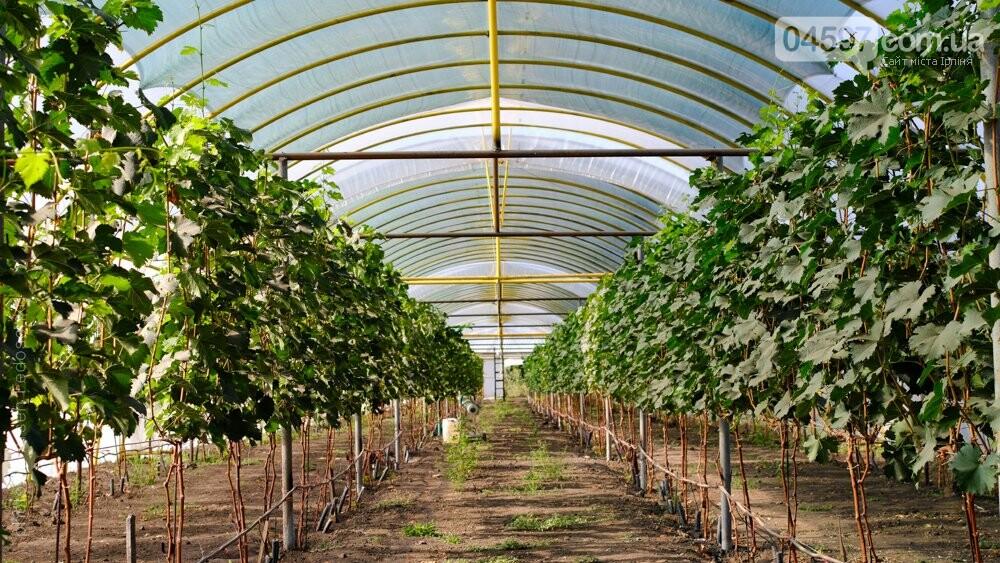 Виноробні неподалік від Ірпеня, де можна продегустувати вино, фото-4